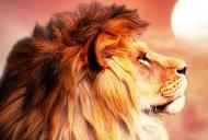 7 cele mai bune motive pentru care sunt mândru că sunt în zodia LEU