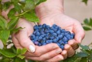 Ce fructe sunt potrivite pentru diabetici