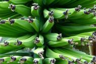 Slăbește ușor cu ajutorul bananelor verzi