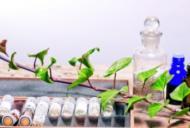 Pentru ce afecțiuni sunt indicate tratamentele homeopatice