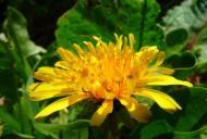 Plante care te ajută să slăbești