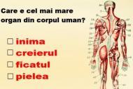 Daca raspunzi corect la aceste intrebari de anatomie, inseamna ca esti un geniu