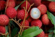 Fructul din cauza căruia au murit sute de copii