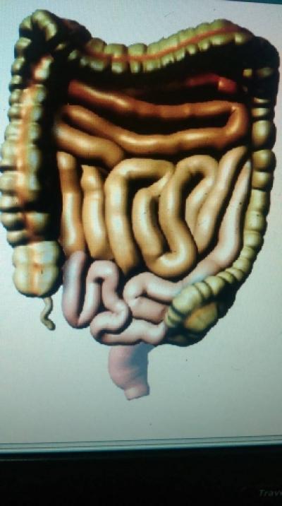 Intestinul si imunitatea- medicina energo-informationala