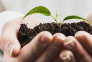 Imunitatea si substantele active din plante - lucruri pe care trebuie sa le stim