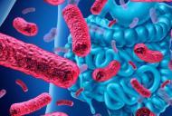 Cand si de ce se administreaza probioticele?