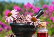 Echinaceea: 10 beneficii pentru sanatate