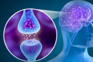 Supliment naturist pentru Parkinson si alte afectiuni cerebrale
